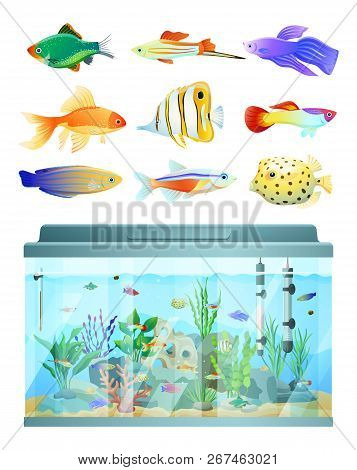 Huge Aquarium And Various Fishes Set Colorful Card Isolated On White Background Vector Illustration