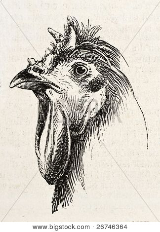 La Fleche chicken head old illustration. Created by Jacque, published on L'Illustration, Journal Universel, Paris, 1858