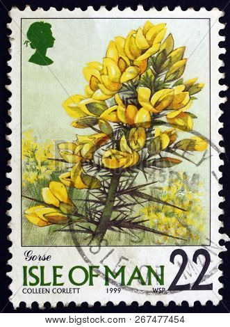 Isle Of Man - Circa 1999: A Stamp Printed In Isle Of Man Shows Gorse, Ulex Europaeus, Is Flowering P