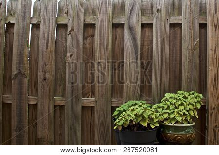 An Old Weathered And Warped Stockade Privacy Fence Fills The Image With Two Green Potted Patchouli P