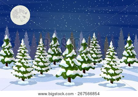 Winter Landscape With White Pine Trees On Snow Hill In Night. Christmas Landscape With Fir Trees For