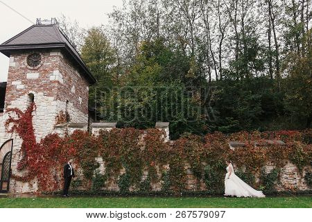 Gorgeous Bride And Stylish Groom Walking At Wall Of Autumn Red Leaves. Sensual Wedding Couple Embrac