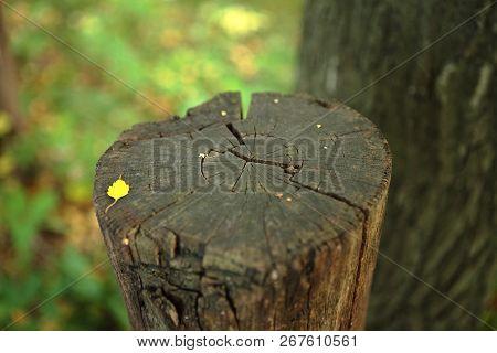 Old Stump And Crack Texture. Old Stump. Tree Stump. Dry Stump. Deforestation. Destroy Trunk.