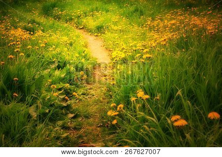 Path To Childhood Field Of Yellow Dandelions Path Landscape Summer Mood Fairy Tale