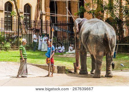 Kandy, Sri Lanka - July 19, 2016: Elephant In The Streets Of Kandy During Poya Full Moon Holiday.
