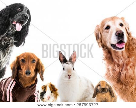 Group of cute fluffy animals looking on camera isolated
