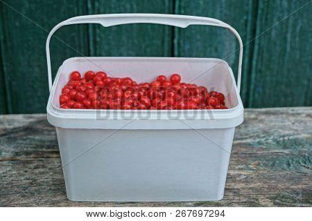 White Plastic Basket With Red Viburnum Berries