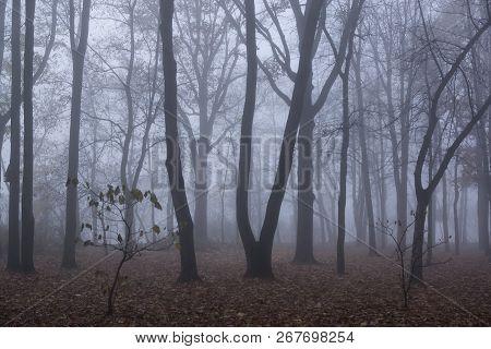 Autumn Forest Mist Landscape. Forest Fog Trees Silhouette In Autumn. Autumn Forest Fog Trees Backgro