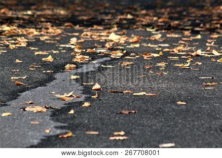 Leaves Scattered Across An Asphalt Driveway After A Misty Rain On An Autumn Afternoon.