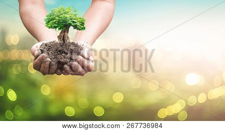 World Environment Day Concept: Human Hands Holding Big Tree Over Blurred City Background