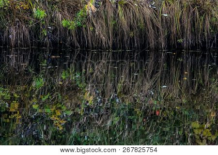 Reflections Of  Grass In The Water Surface Of The River. Background Of Grass And River. Wild Grass O