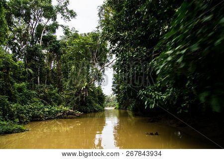 Sail Along The Lush Rainforest Along The Yellow Water Of Sabah, Borneo. Malaysia.