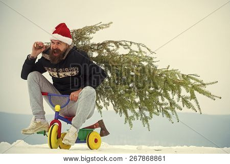 Excited Cyclist Shouting In Santa Hat And Sporty Wear. Happy Hipster Carrying Xmas Tree On White Sno
