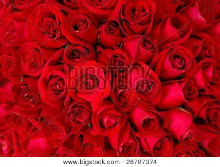 red rose background ,natural texture
