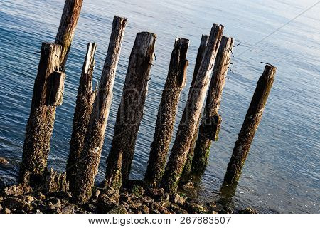 Worn Aged Pylons From A Deteriorated Pier Boardwalk