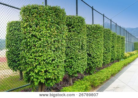 Green plant garden in parallel line order