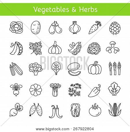 Vector Line Icons With Vegetables And Herbs. Healthy Lifestyle. Vegan & Vegetarian Food. Different K