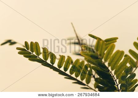 Autumn Leaves Abstract Background.bright Sunny Day In Meadow Background. Close Up Of Acacia Leaves I