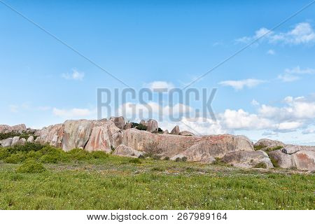 Wildflowers And A Rock Formation At Postberg Near Langebaan On The Atlantic Ocean Coast Of The Weste