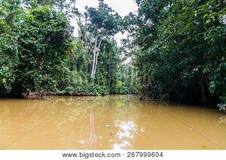 Sail Along The Lush Rainforest Along Yellow Water Of Sabah, Borneo. Malaysia.