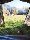 view from the tent in campsite on a tents on a green grass in a pine woods in fall poster