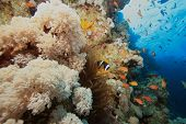 Soft Corals and Anemones poster