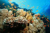Beautiful Coral Reef poster