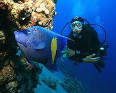 Yellowbar (Arabian) Angelfish and Scuba Diver poster