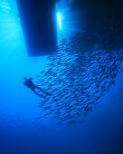 Diver and Shoal of fish silhouetted below dive boat poster