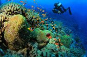Underwater Photographer scuba dives at Anemone City, Red Sea poster