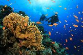 Scuba Divers explore a Coral Reef in the Sea poster