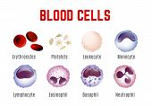 Blood cells types. Editable vector illustration isoated on white background. Erythrocytes, plateletes, leukocytes, lymphocytes, monocytes and more. Educational medical poster in landscape format. poster