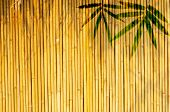 Frame of bamboo-leaves background. Please take a look at my similar bamboo-images poster
