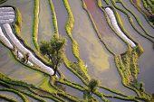 Hani rice terraces of yuanyang, yunnan, china poster