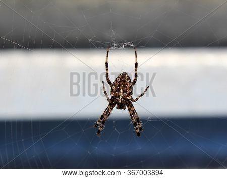 Small Brawn Spider On Web In City Landscape