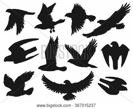 Eagles And Hawks Black Silhouettes Set, Vector Wild Flying Birds Outspread Wings, Swoop Down To Catc