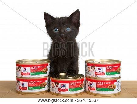 Alameda, Ca - May 15, 2020: Adorable Black  Kitten Standing On Can Of Science Diet Liver And Chicken