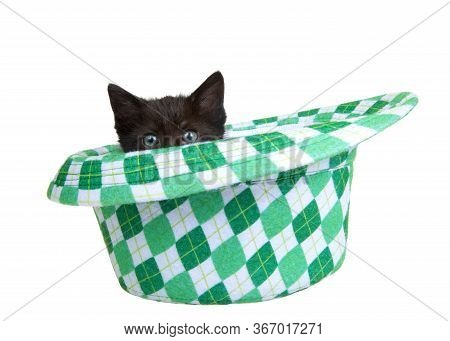 One Black Kitten Peaking Out Of A Saint Patrick's Day Themed Green Checkered Fedora Style Hat, Isola