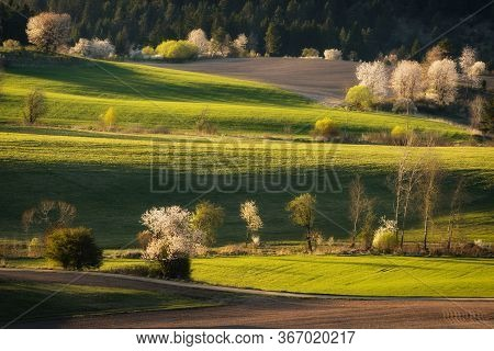 Spring Landscape With Trees, Fields And Meadows In Polana Region, Slovakia. Wavy Country Scenery At