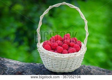 Ripe Berry In Wicker Basket. Vintage Basket With Raspberries. Red Raspberries. Raspberries In Basket
