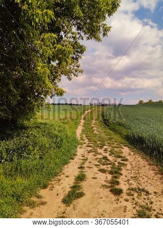 Rural Road In Green Meadow And Blue Sky With Clouds, The Road Through The Old Grass Field, Corn Fiel