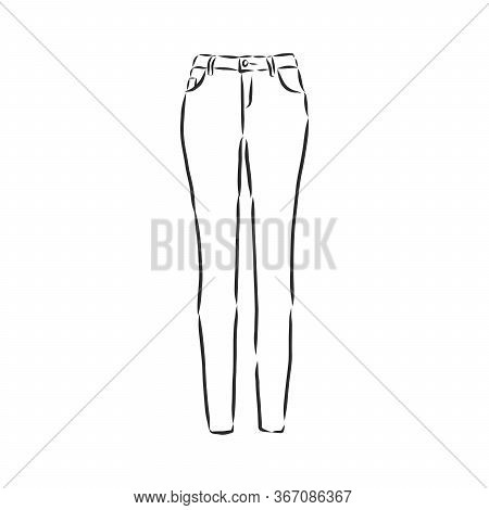 Vector Illustration Of Womens Skinny Pants. Womens Skinny Jeans, Vector Sketch Illustration