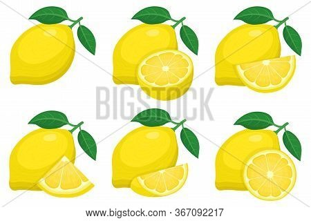 Set Of Fresh Whole, Half, Cut Slice Lemon Fruit Groups Isolated On White Background. Summer Fruits F