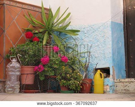 Corner Flower Display In Andalusian Village