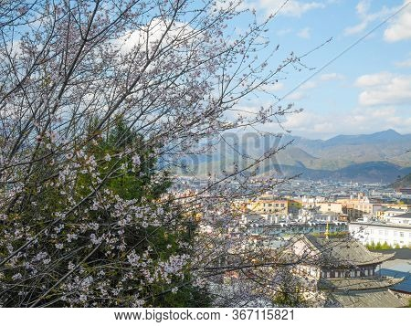 Shangri-la Town With Cherry Blossom From Aerial View