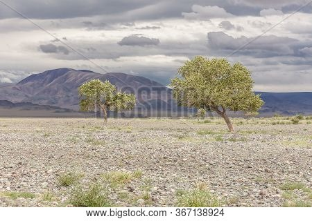Green Oasis Sprouting From Rocky Soil Of Altai Mountains Mongolia