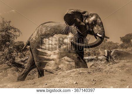 Sepia Elephant Getting Dust Bath On Hillside