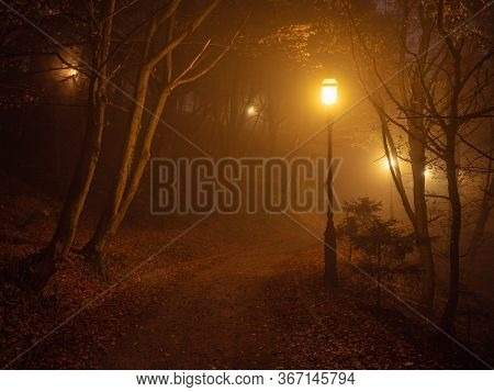 City Park Shrouded In Thick Fog In The Early Morning