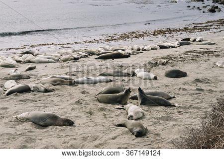Elephant Seal Vista Point