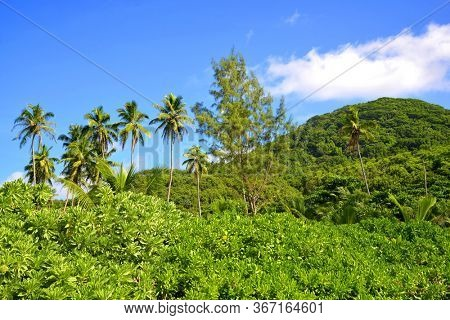 Tropical landscape with coconut palm trees near Petite Anse beach on La Digue island, Indian Ocean, Seychelles.